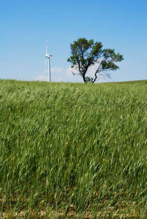 Young wheat plants with wind turbine and tree in background (shallow focus on wheat in foreground) photo
