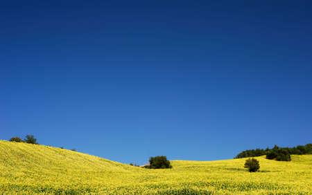 molise: Bright yellow sunflower fields under deep blue sky in Molise