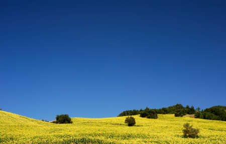 molise: Yellow sunflower fields under deep blue sky in Molise
