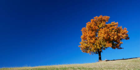 Fall landscape with bright colored tree and deep blue sky Stock Photo - 5385683