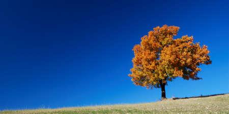 Paisaje de oto�o con �rboles de color brillante y un cielo azul profundo Foto de archivo - 5385683