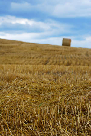 Field after harvest with straw and far away bale (selective focus on stems in foreground)