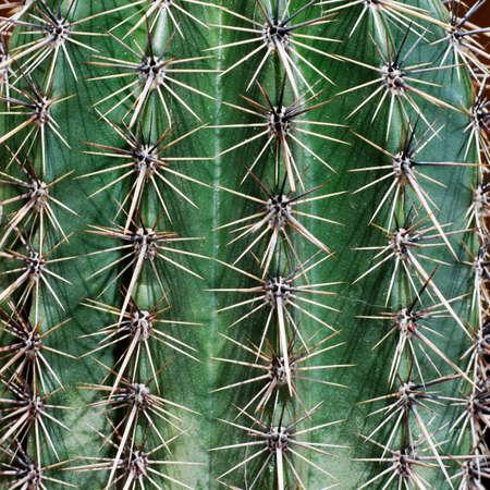 spines: Detail of young saguaro cactus (Carnegia Gigantea) Stock Photo
