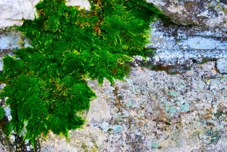 Bright green moss and lichens on  old stone wall Stock Photo