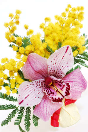 Detail of a pink orchid and yellow mimosa flowers