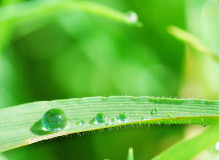 Blade of grass with a row of water drops