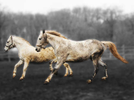 horses on a gray blurred background.