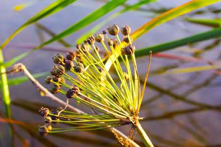 a beautiful flower in the swamp