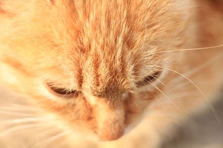 pensive red-haired kitten
