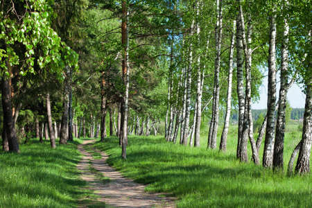 Road in spring forest Stock Photo - 22120308