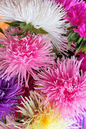 asters: asters background