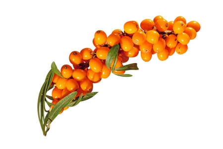 Sea-buckthorn berries photo
