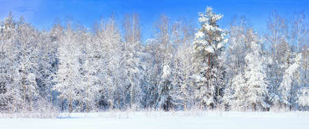 Winter landscape with frozen trees photo