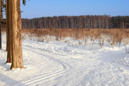 wintersport: Ski tracks in the winter forest Stock Photo