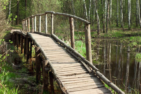 bridge in a spring forest photo