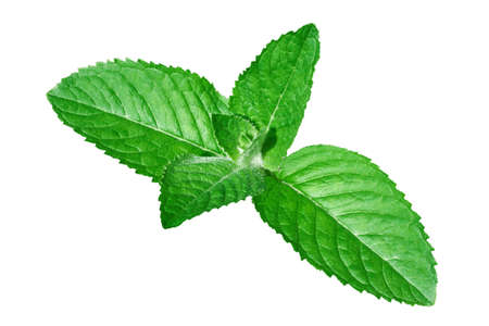 fresh peppermint leaves on white background photo
