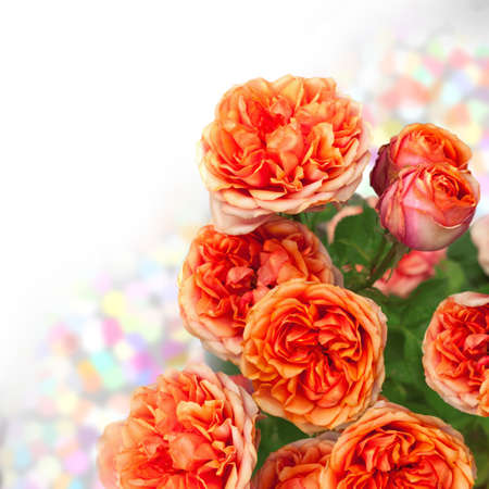 orange roses bouquet with free space for text photo