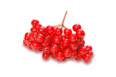 red berries of viburnum isolated on white background photo