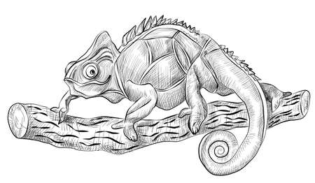 terrarium: chameleon lizard sitting on tree, side view, black and white hand drawn vector sketch
