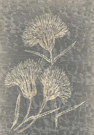 cornflowers: Monochrome cornflowers on grunge texture. Vintage floral decor.