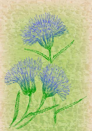 cornflowers: Cornflowers on grunge texture. Vintage floral decor