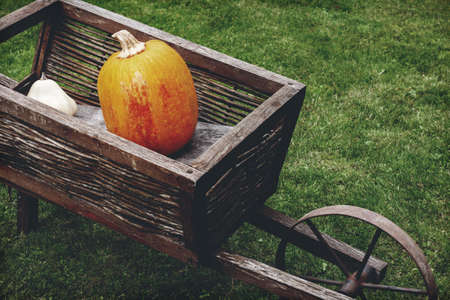 Old wooden cart with pumpkins. Retro aged photo. 免版税图像