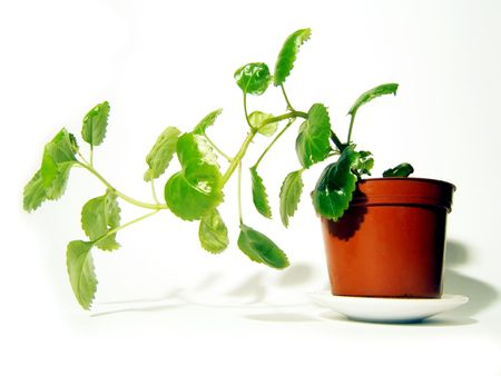 isolated home plant Stock Photo