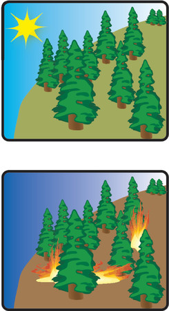 no fires: no more fires in our forest!