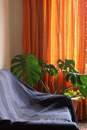 sofa, plant and curtain Stock Photo - 542152