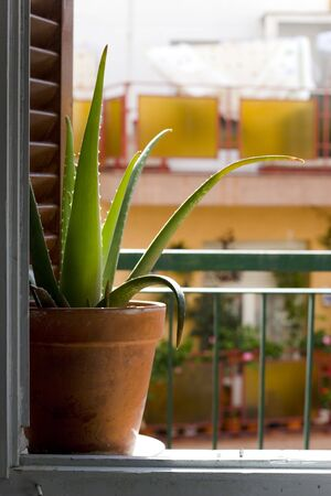 decore: vertical image with cactus in a window, from inside