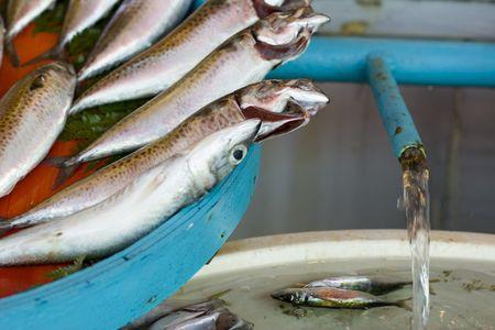 fresh fish macro in a turkish market