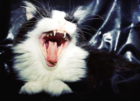 horizontal portrait of a roaring cat