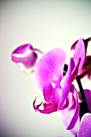 side view of an orchid flower Stock Photo