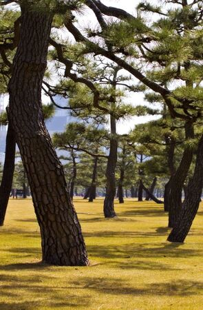 A view of the trees in the Imperial Garden in Tokyo Japan.  Stock Photo