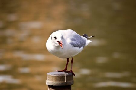 One white seagull perched on a post over water.  photo