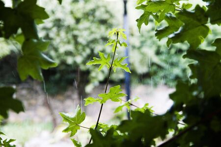 A branch with leaves and the rain behind.  Small dof Stock Photo
