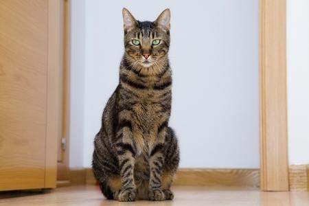 guardian cat in the door. Looking at you