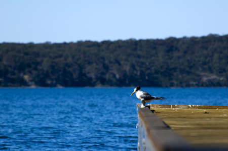 A bird standing at the end of a jetty Stock Photo