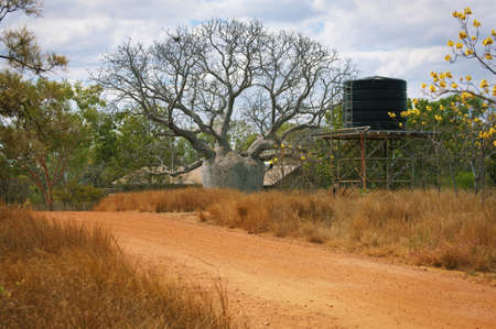A dirt road leads to a very large Boab tree next to a water tower in the Australian outback