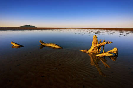 A large piece of driftwood lies in a shallow pool of water under a blue sky. Stock Photo