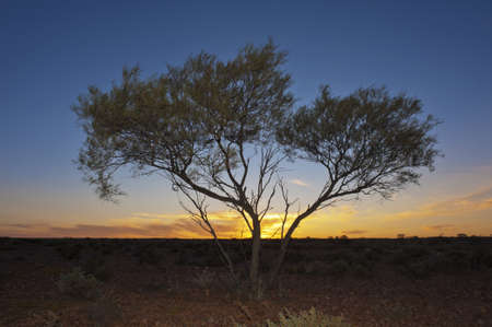 A lone tree is silhouetted by the setting sun in the Australian outback. Stock Photo