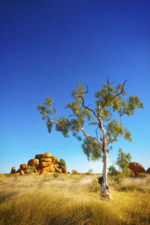 scrub grass: View of the beautiful landscape in the Australian outback.