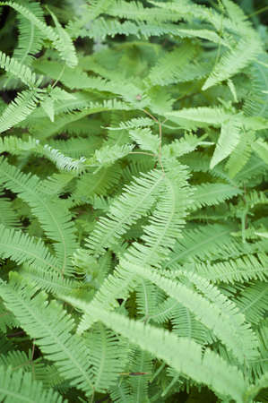 An image full of green fern fronds.