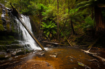 A small waterfall cascades through a tropical forest into a shallow pool  photo