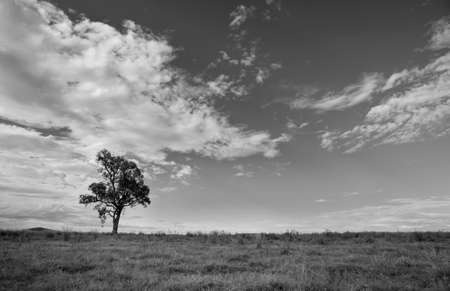 imposing: Lone tree landscape under imposing clouds   Black and White  Stock Photo