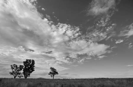 imposing: Three trees landscape under imposing clouds   Black and White