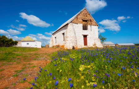 An old white farm building sits in amongst a field of flowers. Stock Photo