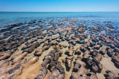shark bay: Stromatolites in the World Heritage Area of Shark Bay, Western Australia.  Most likely earths first living microorganisms and producer of oxygen, around 3 billion years ago. Stock Photo