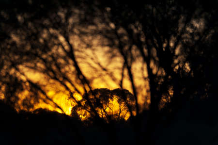 An orange sunset with the silhouette of tree branches in the foreground.