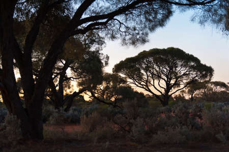 australian outback: The landscape of the Australian outback at sunset.